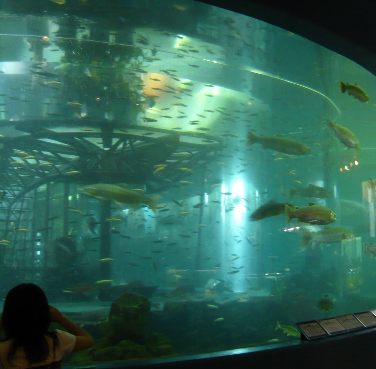 水族館 (9).JPG